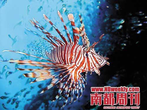 壁纸 动物 海底 海底世界 海洋馆 水族馆 鱼 鱼类 500_375