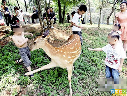 动物园美丽孔雀被如此虐待|网眼天下|荆州新闻网