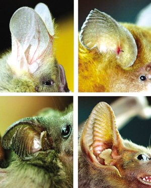 初中生物耳朵结构图
