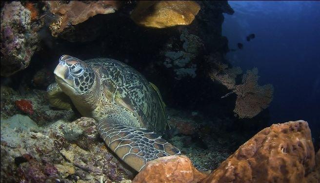 亚太十大美丽海底世界:夏威夷岛如水晶宫