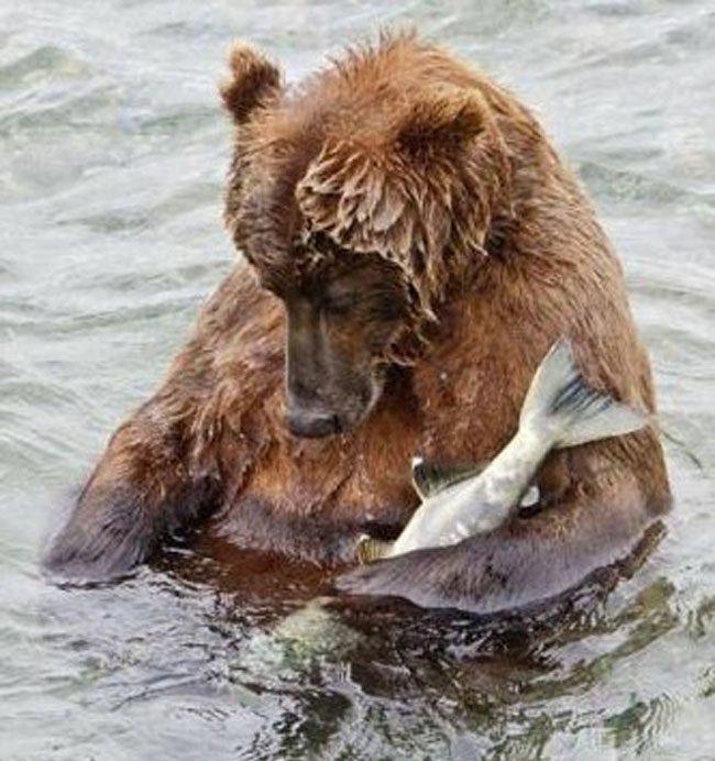 组图:盘点2011年最萌动物搞笑图片