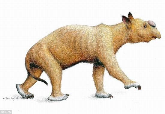 澳大利亚发现史上最大有袋动物