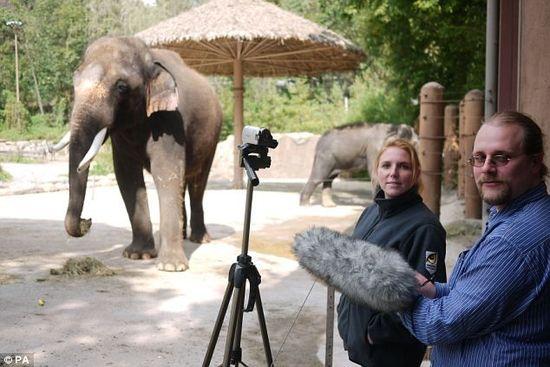 韩国一大象开口讲韩语