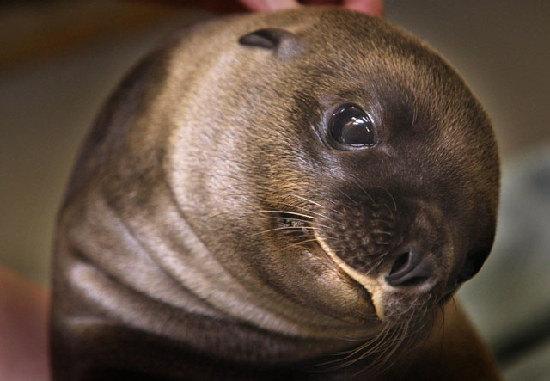 2012年最可爱的动物宝宝照片