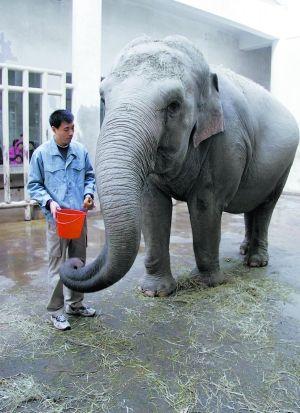 北京动物园活象附近摆大象骨骼标本