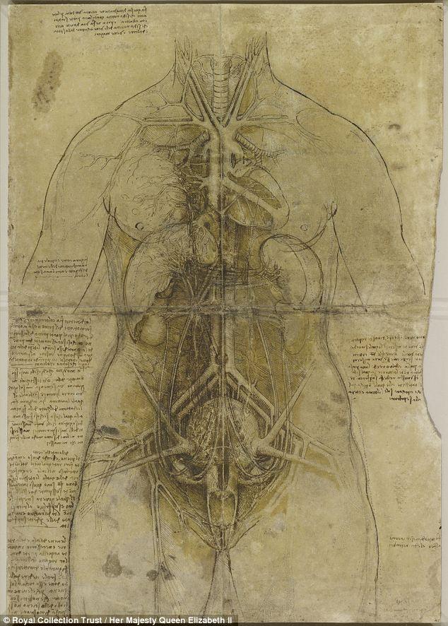 探秘达芬奇人体解剖图 曾解剖30多具尸体