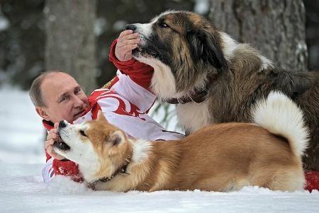 """俄罗斯总统普京与日本赠与俄方的秋田犬""""小梦""""在雪中嬉戏"""