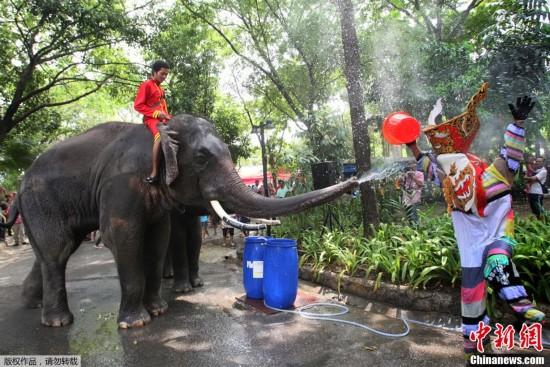 当地时间2013年4月10日,泰国曼谷,动物园大象喷水嬉戏欢庆即将