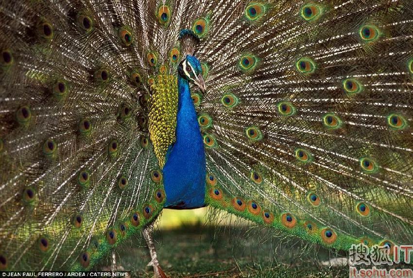 炫耀!盘点自然界中多彩的动物(组图)