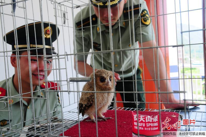 保护动物猫头鹰幼仔