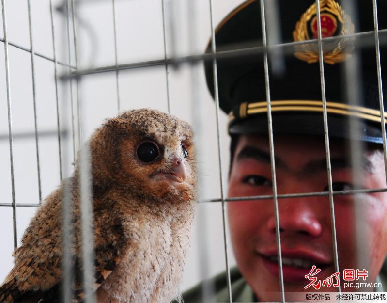 照顾他们救助的一只国家二级保护动物——野生猫头鹰