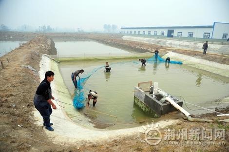 荆州助推人工规模化泥鳅繁殖技术突破水产业1加万能工具包操作步骤图片