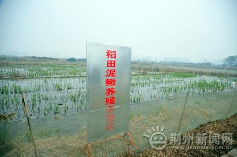 荆州突破技术规模化泥鳅繁殖人工助推水产业fanuc机床操作说明书图片