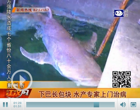 中山公园动物园大鲨鱼绝食4天