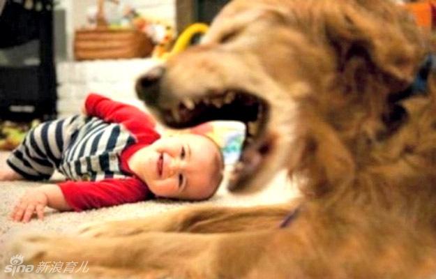 """来看看下面这组孩子和动物亲吻""""互咬""""的萌图吧,保证你笑翻天."""