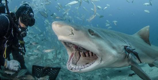壁纸 动物 海底 海底世界 海洋馆 水族馆 鱼 鱼类 550_279