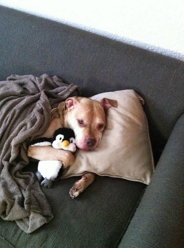 可爱狗狗抱玩偶酣睡萌照|组图
