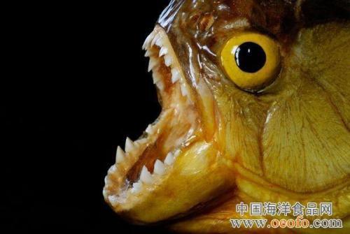 蟹形似蜘蛛 盘点全球十大最恐怖的杀人动物(组图)