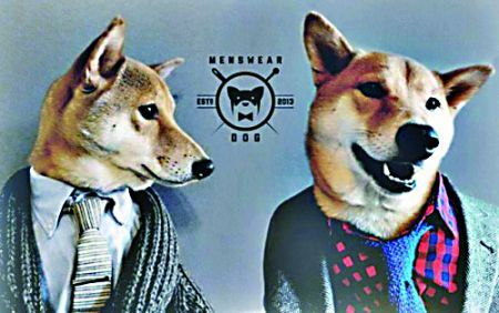 柴犬穿衣壁纸高清可爱