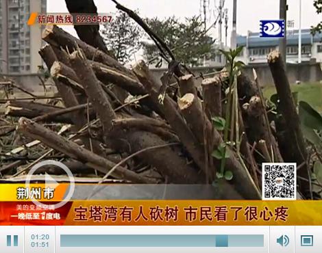 荆州:宝塔湾有人砍树 市民看了很心疼