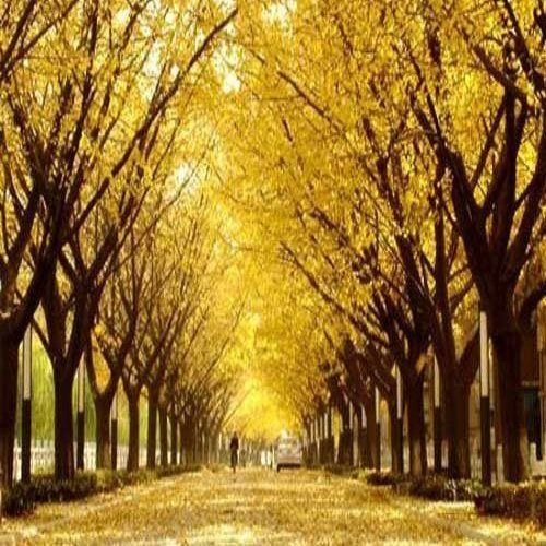 打造四季花城 荆州中心城区新种市树市花14万株
