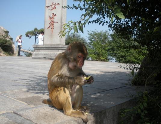 猴年旅行第一弹 和猴子来一次亲密接触