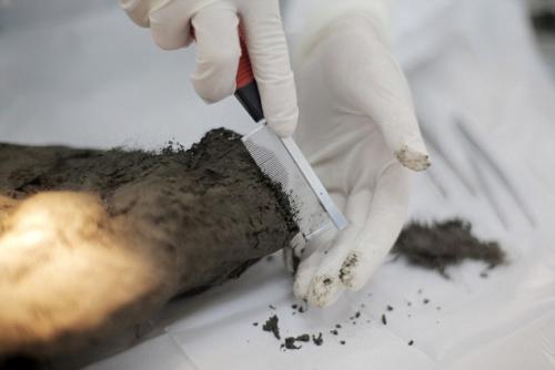 年前木乃伊狗被解剖 内脏保存完好
