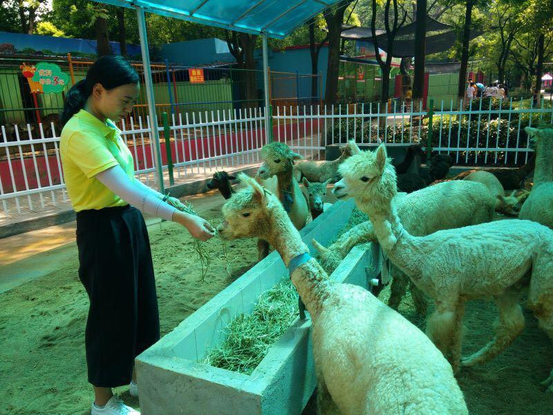 """快一起去沙市中山公园动物园看""""羊咩咩""""(组图)—荆州"""