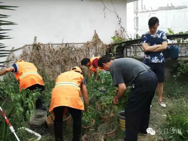 创卫风采:清除花台菜园 督促物业绿化
