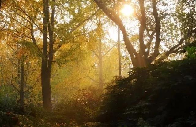 壁纸 风景 森林 桌面 640_416