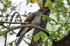 特约记者行:观鸟观出鸟们的一些趣事