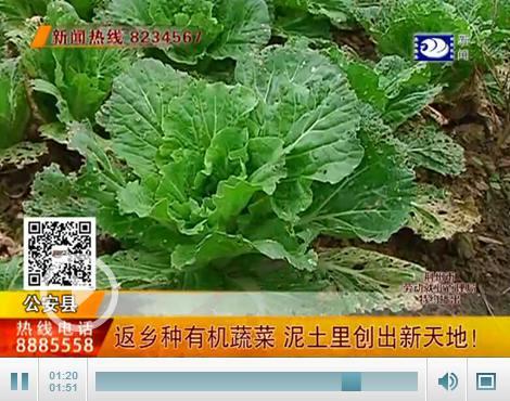 bob注册:就业创业在荆州:返乡种有机蔬菜 泥土里创出新天地
