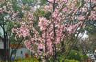 特约记者行:手机拍摄家门口的春天