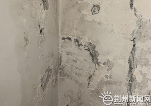 烦!屋子常年漏水墙体霉变没法住人 楼上却在种菜