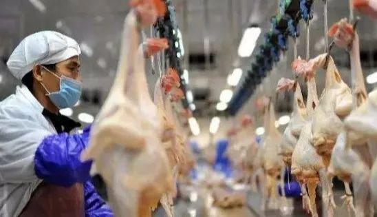 9月1日起 公安县斗湖堤城区全面禁止活禽交易与分散屠宰