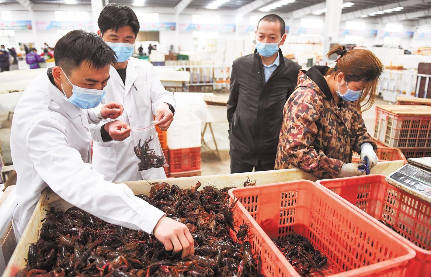 监利日售小龙虾250吨 1.5万吨小龙虾4月中旬前售完