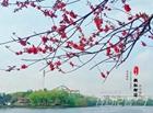 特约记者行:春天花事 桃红柳绿景如画