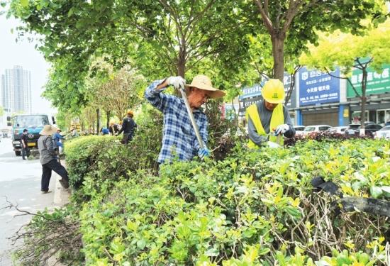 荆州多条道路隔离带进行绿化改造 预计6月底完工
