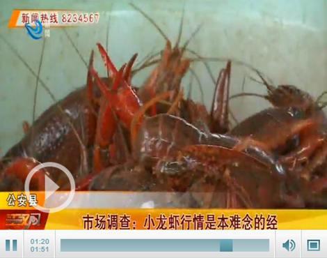 记者调查:走出疫情阴影 荆州小龙虾如何自提