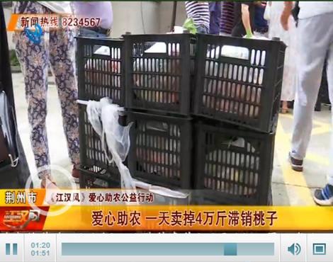 《江汉风》爱心助农 一天卖掉4万斤滞销桃子