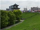 特约记者行:荆江堤岸防护林的礼赞