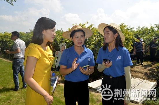万亩黄桃香满园 江陵2020年三湖黄桃季正式开园